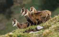 Slovakia wilderness 0670