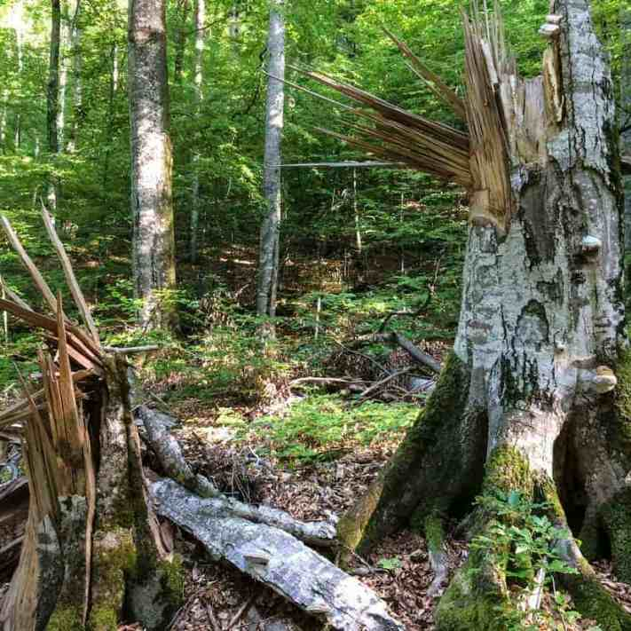 Uholka Wilderness Sirokyy Luh 0058-3