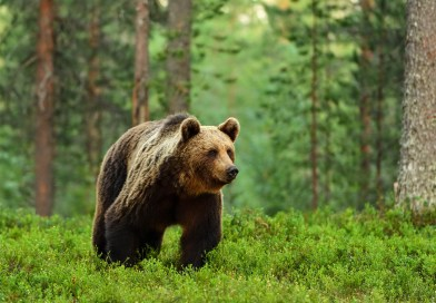 €30 000 reward to find French bear killer