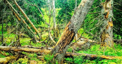 Urwald_korr.jpg - © European Wilderness Society CC BY-NC-ND 4.0