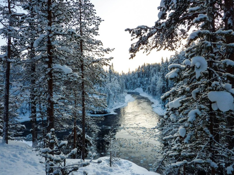 Oulanka Wilderness - © All rights reserved