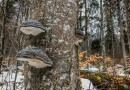 Bavarian National Park Sumava - 0576.jpg - © European Wilderness Society CC BY-NC-ND 4.0