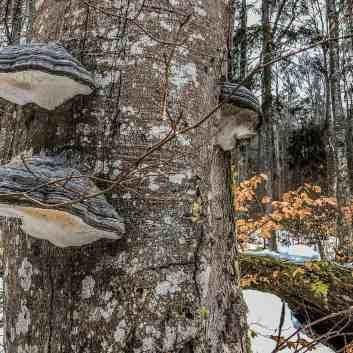 Bavarian National Park Sumava - 0576.jpg