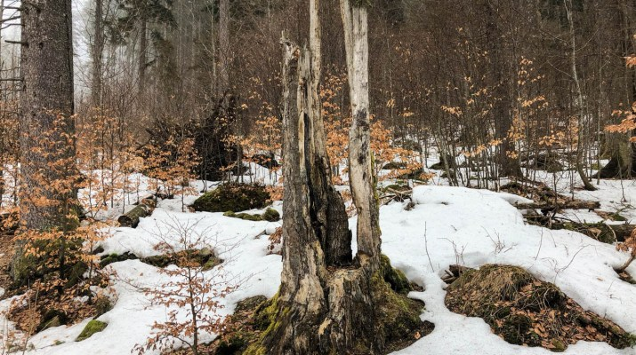 Complexity of strict protection in National Park Sumava