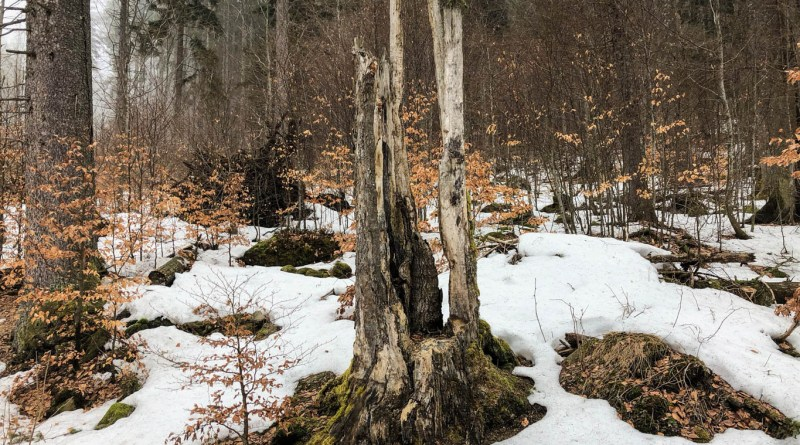Bavarian National Park Sumava - 0582.jpg - © European Wilderness Society CC BY-NC-ND 4.0