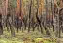Koenigsbruecker Heide _ 16935.jpg - © European Wilderness Society CC BY-NC-ND 4.0