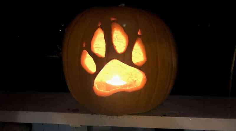 EWS Halloween-21797.JPG - © European Wilderness Society CC BY-NC-ND 4.0