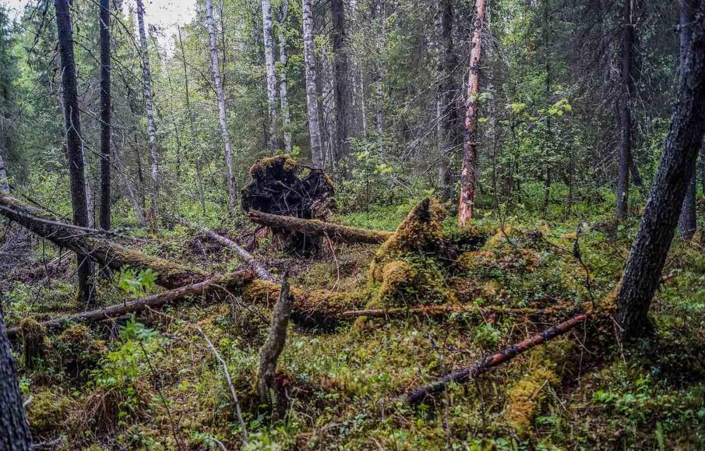 Archangelsk-21882.JPG - © European Wilderness Society CC BY-NC-ND 4.0