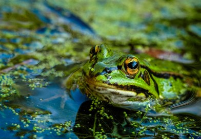 Danube_Parks_1050_attila_mrocz_frog.jpg - © Danube Parks All Rights Reserved