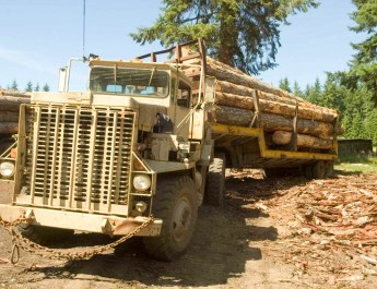Deforestation Romania Hannes Knapp 0115.jpg - © European Wilderness Society CC BY-NC-ND 4.0