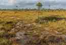 Sooma National Park-5157.JPG - © European Wilderness Society CC BY-NC-ND 4.0