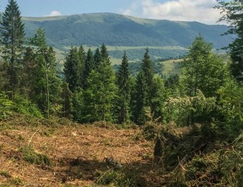 Ukraine-Sanitary-Logging-Evaluation-0022.jpg - European Wilderness Society - CC NonCommercial-NoDerivates 4.0 International