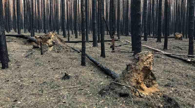 Forest Fire Treuebrietzen Brandenburg-22550.JPG - © European Wilderness Society CC BY-NC-ND 4.0