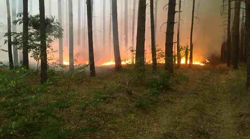Forest Fire Treuebrietzen Brandenburg-22601.jpg - © European Wilderness Society CC BY-NC-ND 4.0
