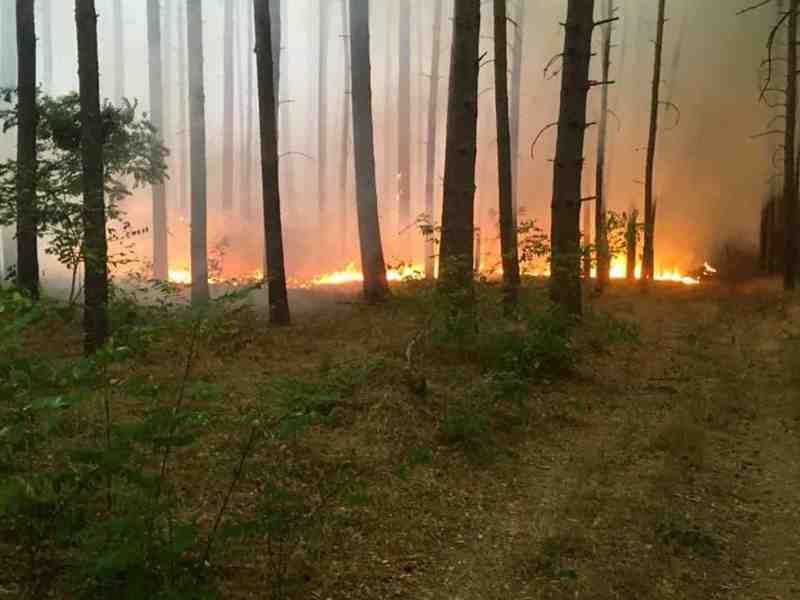 Forest Fire Treuebrietzen Brandenburg-22601.jpg - European Wilderness Society - CC NonCommercial-NoDerivates 4.0 International