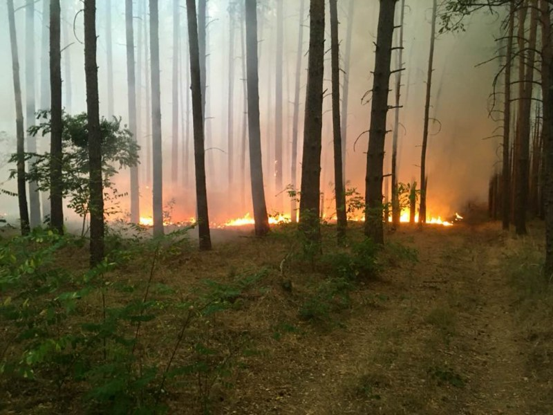 Forest Fire Treuebrietzen Brandenburg-22601.jpg - European Wilderness Society - CC NonCommercial-NoDerivates 4.0 International