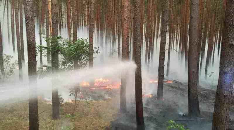 Forest Fire Treuebrietzen Brandenburg-22603.jpg - © European Wilderness Society CC BY-NC-ND 4.0