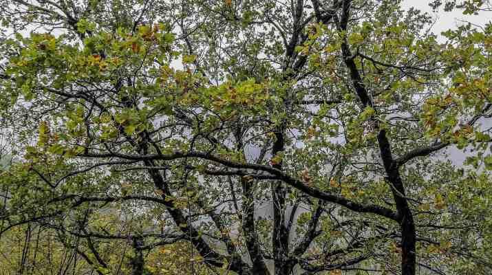 Italian Forest Fund-22608.jpg - European Wilderness Society - CC NonCommercial-NoDerivates 4.0 International