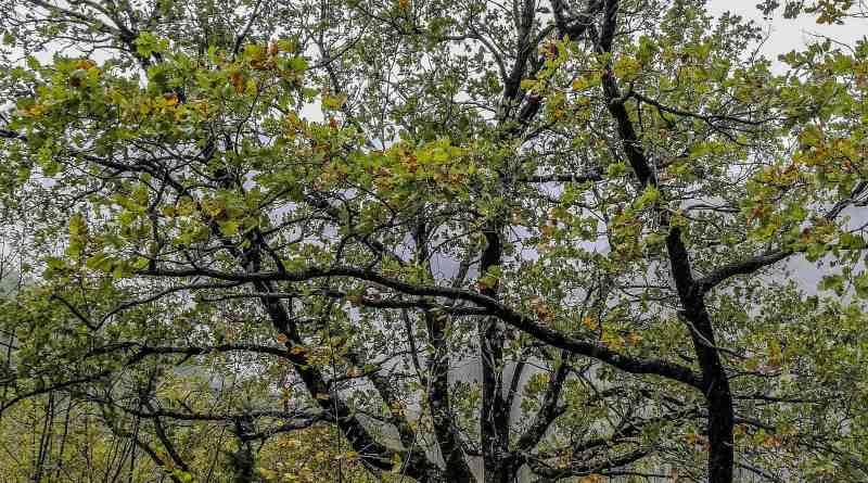 Italian Forest Fund-22608.jpg - © European Wilderness Society CC BY-NC-ND 4.0