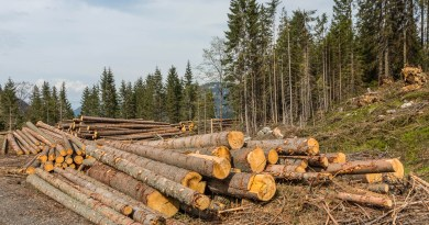 Logging in Slovakian protected areas-22725.jpg - © European Wilderness Society CC BY-NC-ND 4.0