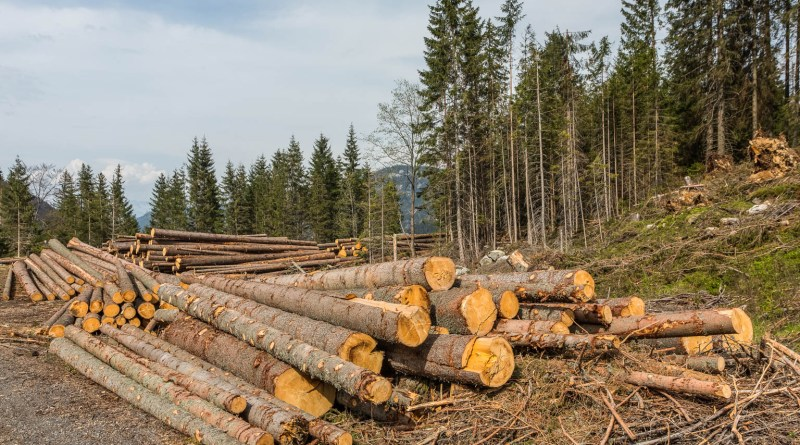 Science in the crossfire of Romanian logging conflict