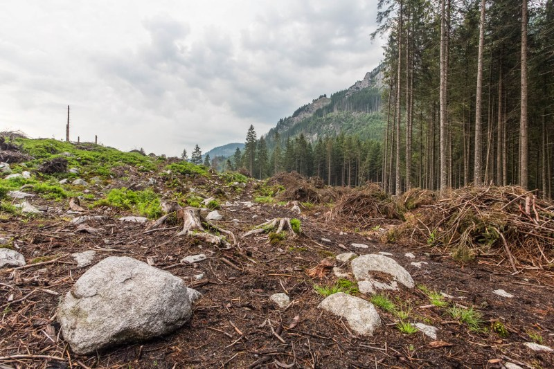 Logging in Slovakian protected areas-22730.jpg - European Wilderness Society - CC NonCommercial-NoDerivates 4.0 International
