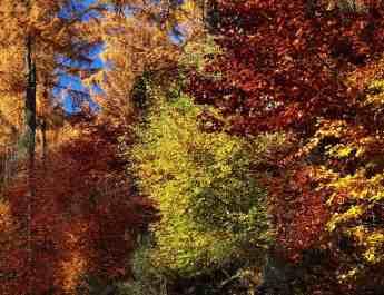 Copyrighted National Park Hunsrück-Hochwald