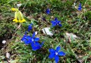 Prealpi Giulie-23260.jpg - © European Wilderness Society CC BY-NC-ND 4.0