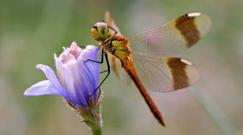 Global insect numbers continue to drop