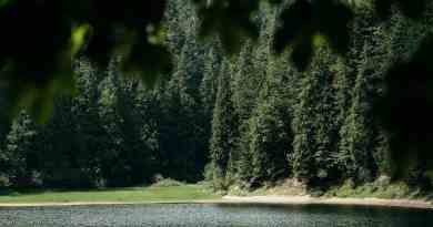Ukraine Nature © Brandon Hartwig-26232.jpg - © European Wilderness Society CC BY-NC-ND 4.0