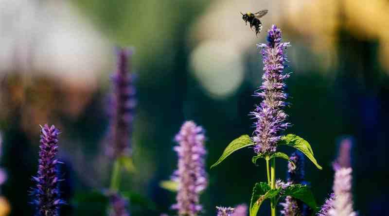 Ukraine Nature © Brandon Hartwig-26242.jpg - © European Wilderness Society CC BY-NC-ND 4.0
