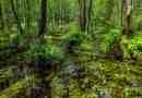 Bondarivske_Wetland -30669.JPG - © European Wilderness Society CC BY-NC-ND 4.0