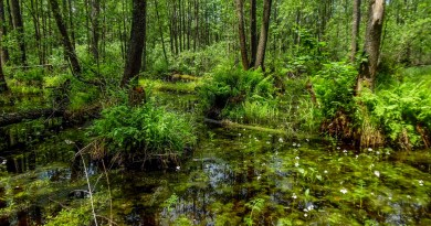 Bondarivske_Wetland -30669.JPG - © European Wilderness Society CC BY-NC-ND 4.0