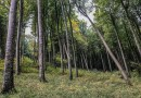 EWS - European Beech Forest Network Vilm 2017 -14233_.jpg