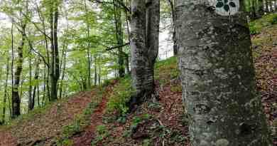 Interreg BEECH POWER Korkar Field Visit-31315.jpg - © European Wilderness Society CC BY-NC-ND 4.0