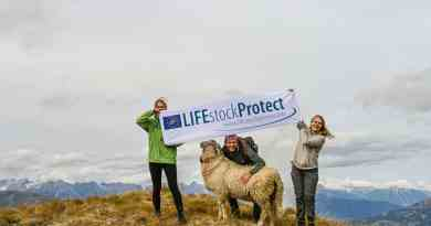 LIFEstockProtect: Giving a hand (or 10) to a sheep farmer in Tyrol