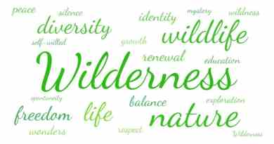 Word cloud Wilderness