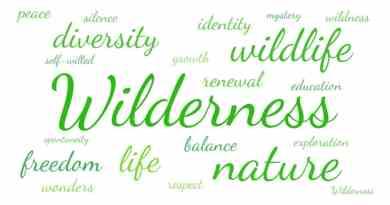 Word cloud Wilderness