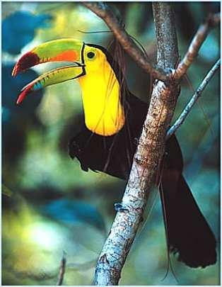 Belize Kayak Trips Itinerary 72