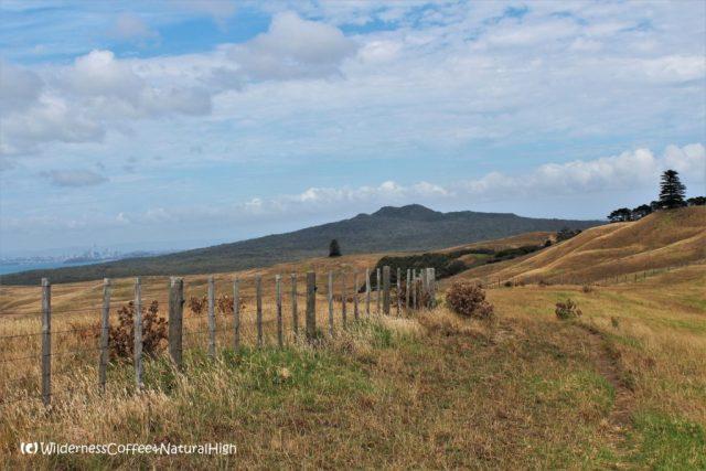 Rangitoto-Motutapu island track, North Island, New Zealand