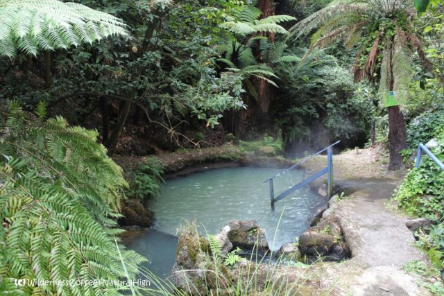 Geothermal river, Taupo volcanic field, North Island, New Zealand