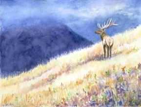 Elk, ©Heidi Skiba