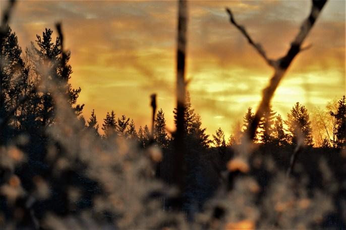 sunset-through-frosty-window