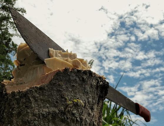 chop-stump-bark-sky