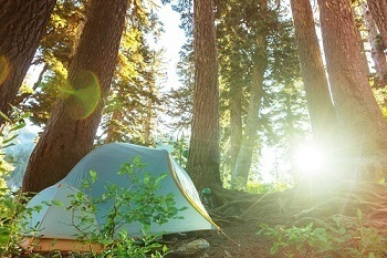 Family Camping Tent in the Woods Outdoors