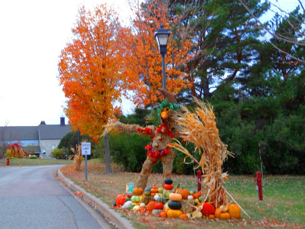 Fall Color 2012 Minnesota Arboretum (6/6)