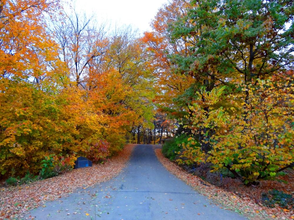 Fall Color 2012 Minnesota Arboretum (3/6)