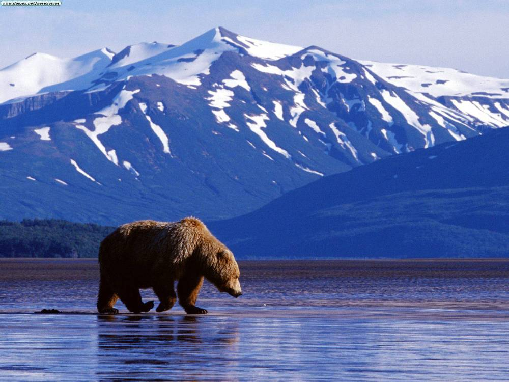 Need Suggestions: 10 Days Trip To Alaska