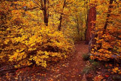 Fall Leaves in the West Fork of Oak Creek Canyon