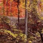 Fall Leaves in Oak Creek